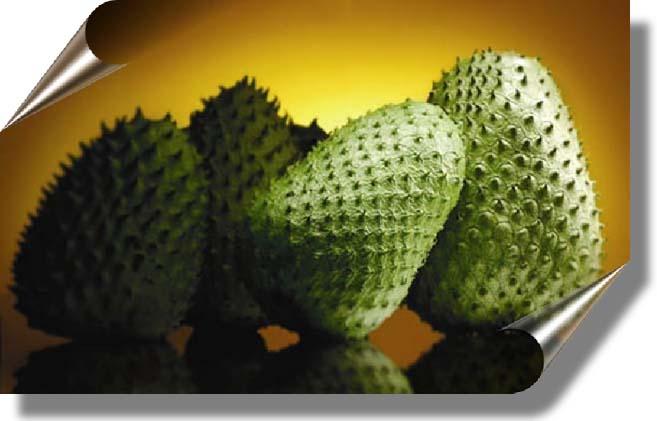 La Graviola o Guanabana Planta Milagrosa 10000 Veces más Potente que la Quimioterapia