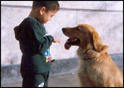enseñar a los perros