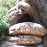 arbol de africa, talla en madera, escultura madera